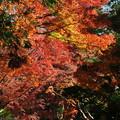 写真: 晩秋色を見上げる