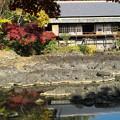 写真: 小浜池に映える秋色