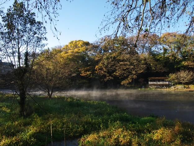 厳寒の朝~柿田川湧水 *d