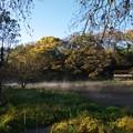 写真: 厳寒の朝~柿田川湧水 *d