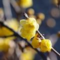 新春の香り *a