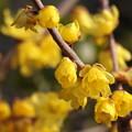 写真: せせらぎに漂う春の香り