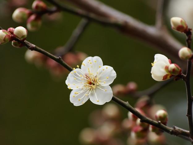 せせらぎに漂う春の香り *a