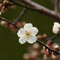 写真: せせらぎに漂う春の香り *a