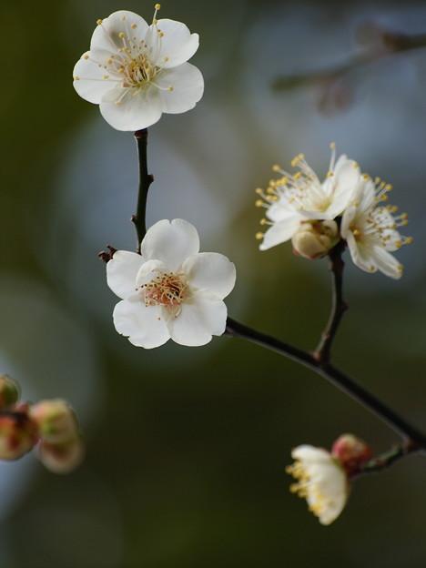 せせらぎに漂う春の香り *c