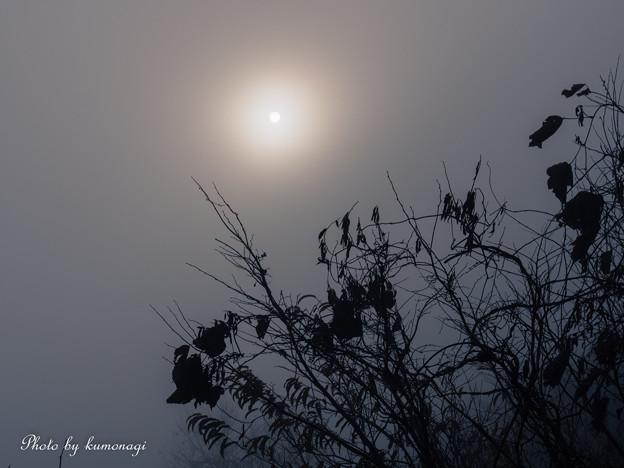 写真: 冬の幻想。#1
