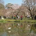 写真: 京都、府立植物園(3)平和な畔 H29,4,5