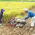 写真: 稲刈り(2)H29,9,16