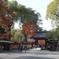 京の紅葉、金閣寺(2)H29,11,17