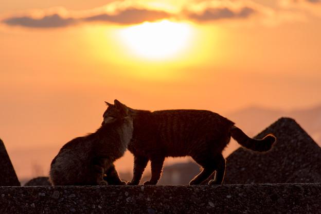 写真: 夕焼けにゃんにゃん♪