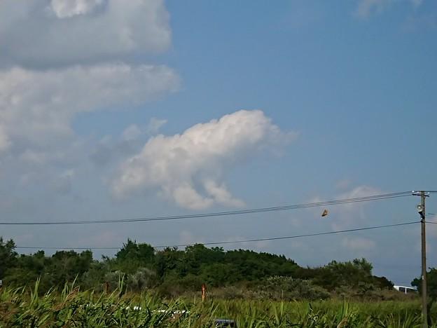 写真: ワンコ雲