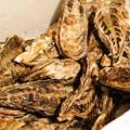 Photos: サロマ産 牡蠣2017