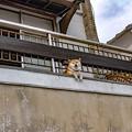 癒し犬の全貌