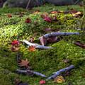 写真: 苔むす仏庭