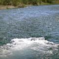 写真: The River