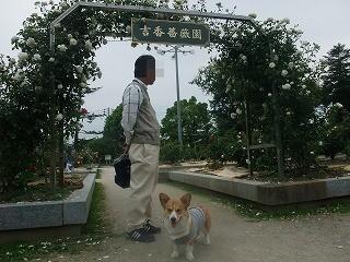 2009_0516錦帯橋に行く0074