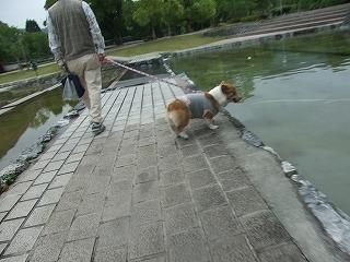 2009_0516錦帯橋に行く0061