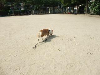 2009_0615今朝の公園で0009