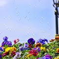 写真: 花とシャボン玉