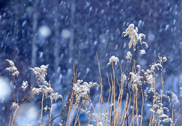 美しく雪化粧