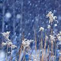写真: 美しく雪化粧