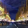 Photos: イチョウ祭り