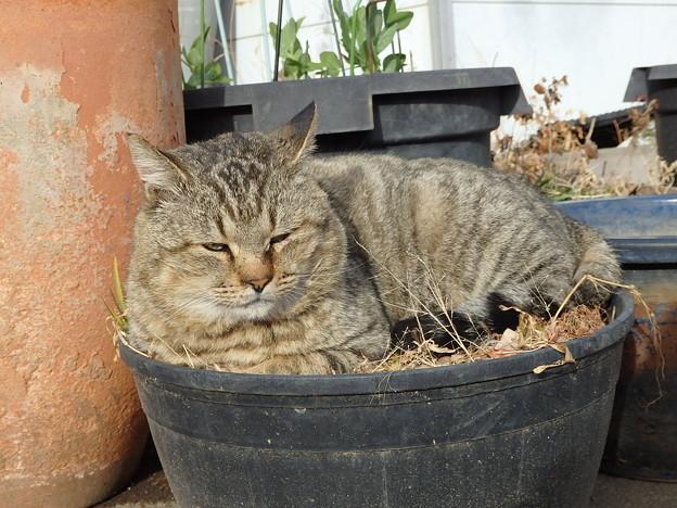 写真: ジュニ君in植木鉢