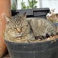 ジュニ君in植木鉢