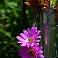 美花角の寄せ植え(バケツ風釣鉢)