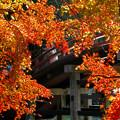 写真: 丹生都比売神社:太鼓橋と紅葉