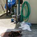 ホースと猫たち