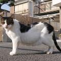 Photos: 外猫おっと♂
