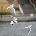写真: 飛翔へ