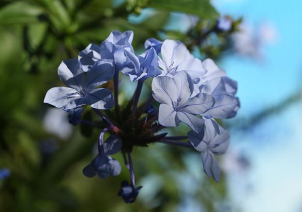 写真: ブルー