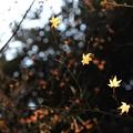 小石川後楽園09