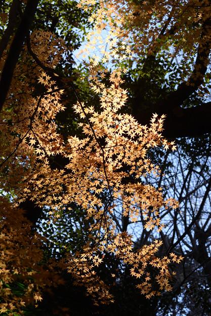 小石川後楽園15