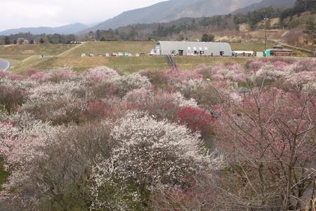 いなべ農業公園 (5)