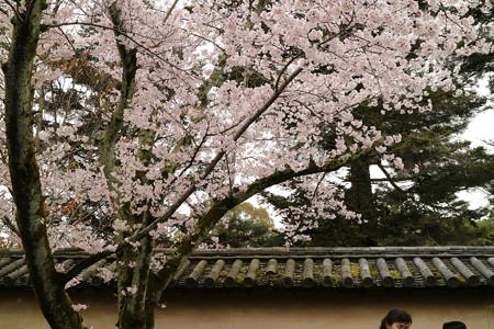 醍醐寺 (5)