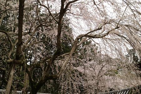 醍醐寺 (8)