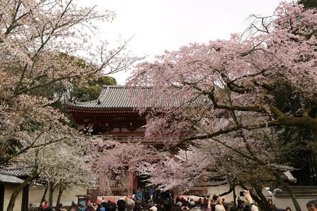 醍醐寺 (11)
