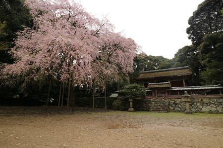 醍醐寺 (14)