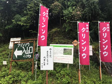 妙高山のクリンソウ (5)