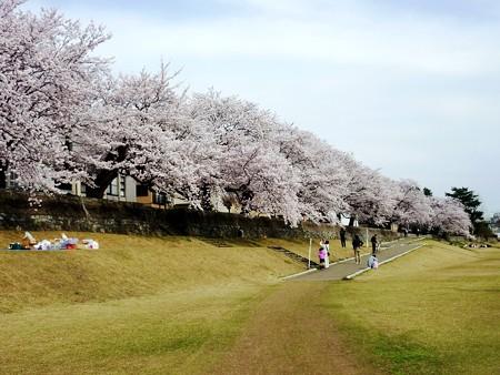 19、寺町〜犀川の桜