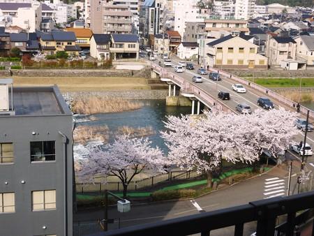 28、寺町〜犀川の桜