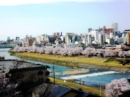 29、寺町〜犀川の桜