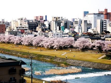 30、寺町〜犀川の桜