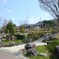 写真: 19,オキナグサ、吉岡園地