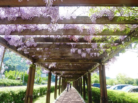 2−吉岡園地の花