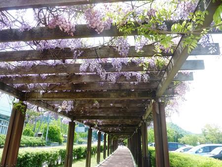 3−吉岡園地の花