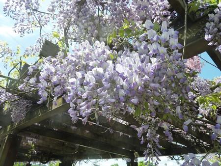 4−吉岡園地の花